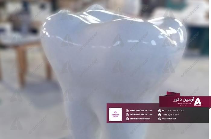 ماکت فایبرگلاس دندان